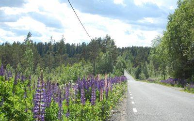 De weg door het dorp